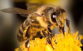 I microrganismi EM per la difesa delle api: protocollo innovativosostenibile