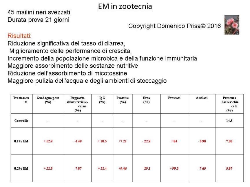 Vittorio Veneto presentazione 27 Agosto dr. Prisa3