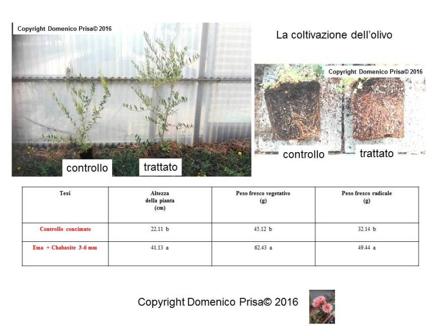 Olivo biologico: tecniche innovative per la coltivazione e ladifesa