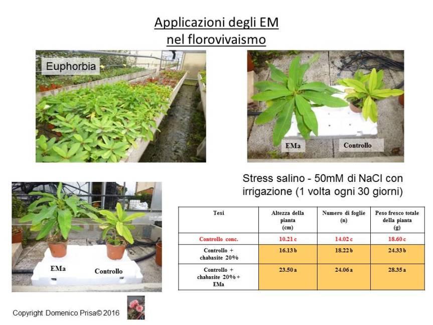 La coltivazione di Euphorbia con metodiinnovativi