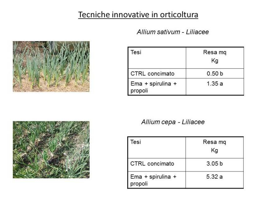 Tecniche innovative per la coltivazione di Aglio eCipolla