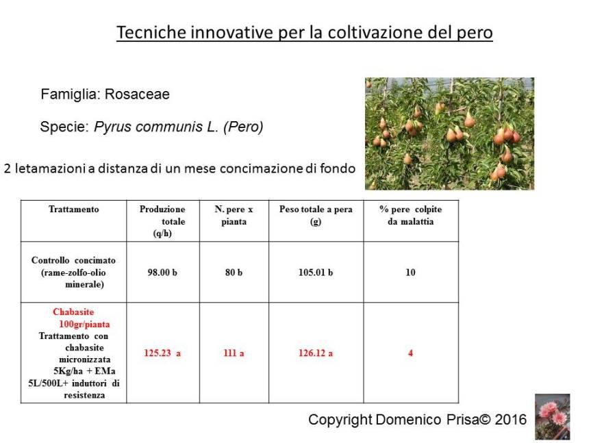 La coltivazione e difesa del pero senza prodotti disintesi