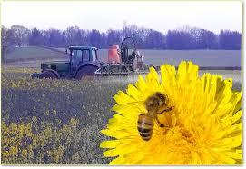 Utilizzo dei pesticidi e rischi per la saluteumana