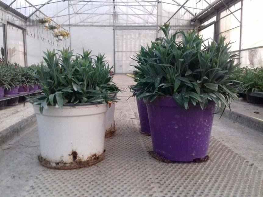 Microrganismi EM e zeolite: effetti importanti sullo sviluppo dellepiante