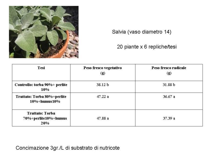 Humus di lombrico per la coltivazione di lattuga esalvia