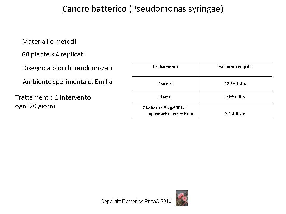 kiwi cancro batterico