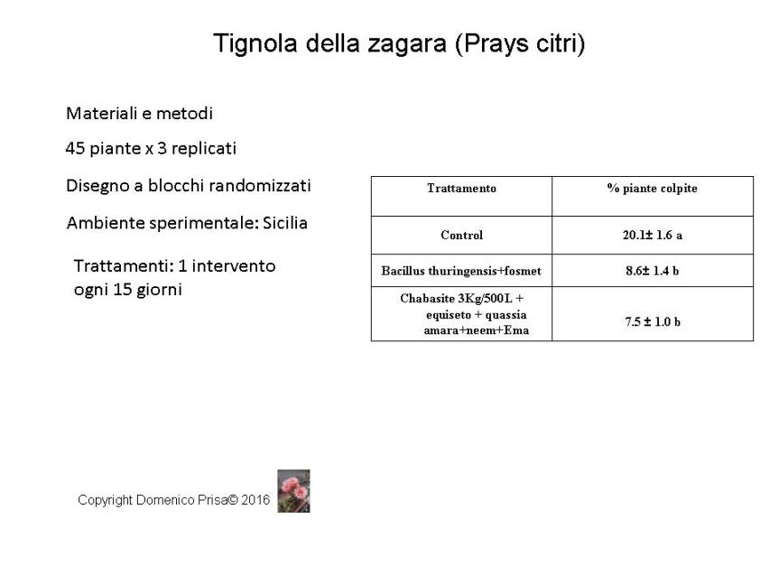 Diapositiva8