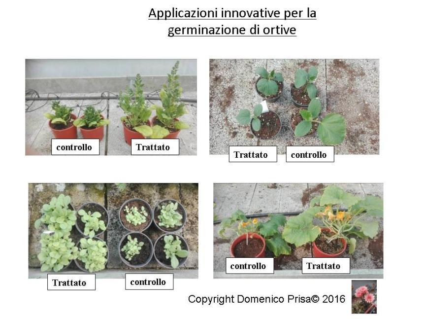 La coltivazione Micronaturale del melone e di altreortive
