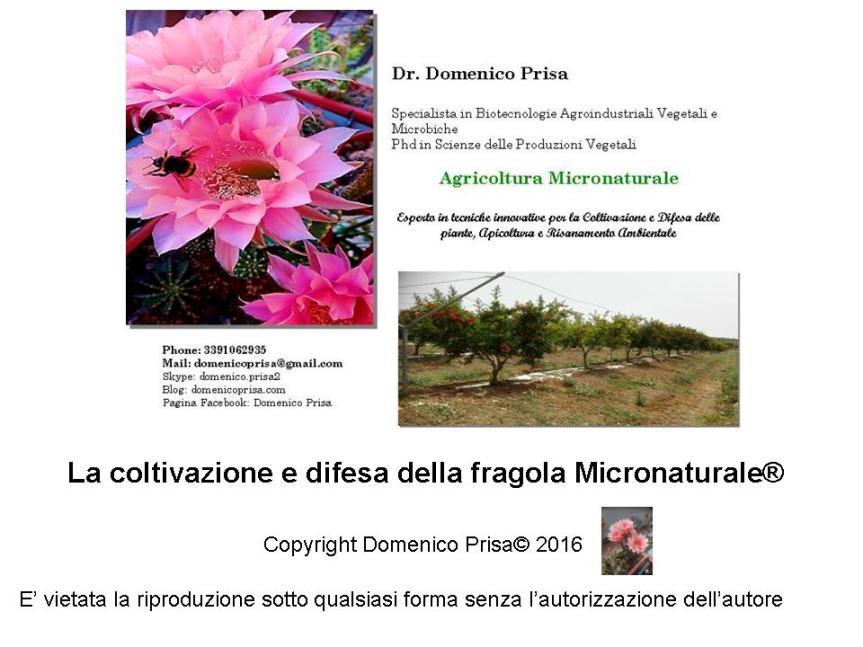 AGRICOLTURA MICRONATURALE®. LA COLTIVAZIONE E DIFESA DELLAFRAGOLA.