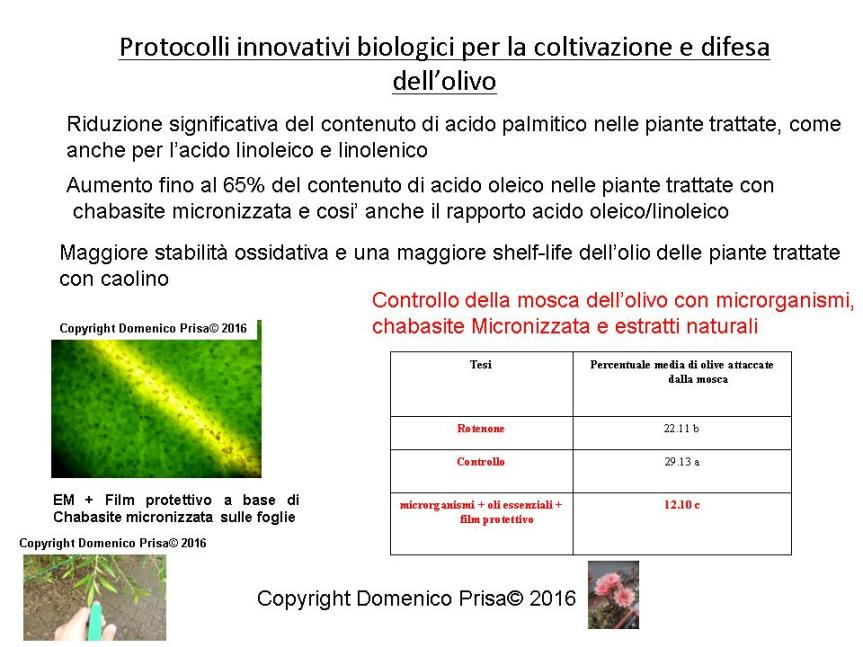 AGRICOLTURA MICRONATURALE®. LA DIFESA DELL'OLIVO DALLA MOSCA CON TECNICHEINNOVATIVE