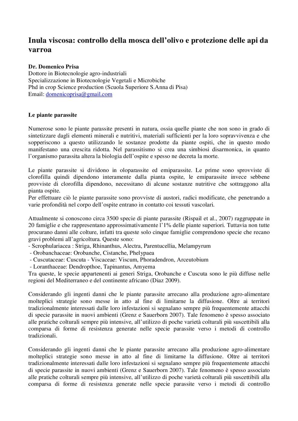 Inula-Viscosa_-controllo-della-mosca-dell'olivo-e-protezione-delle-api-da-varroa-001