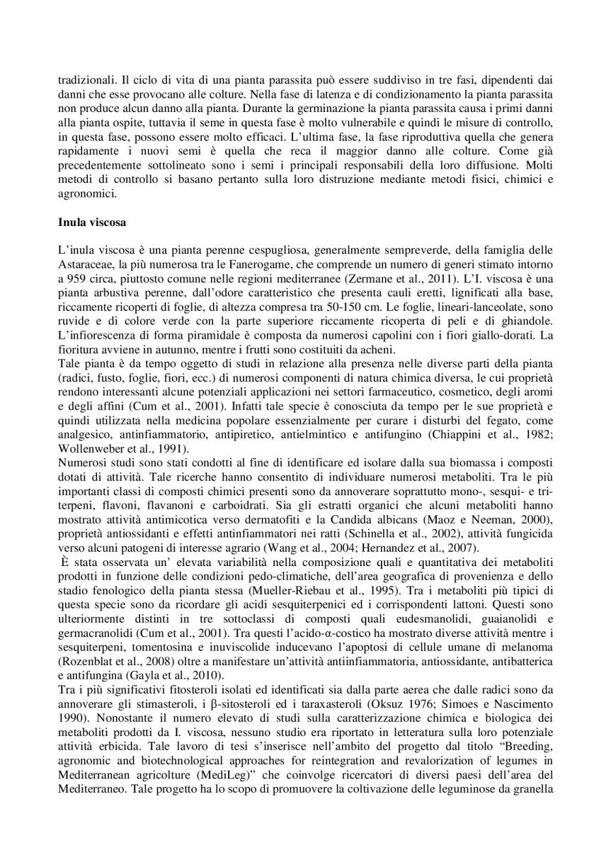 Inula-Viscosa_-controllo-della-mosca-dell'olivo-e-protezione-delle-api-da-varroa-002