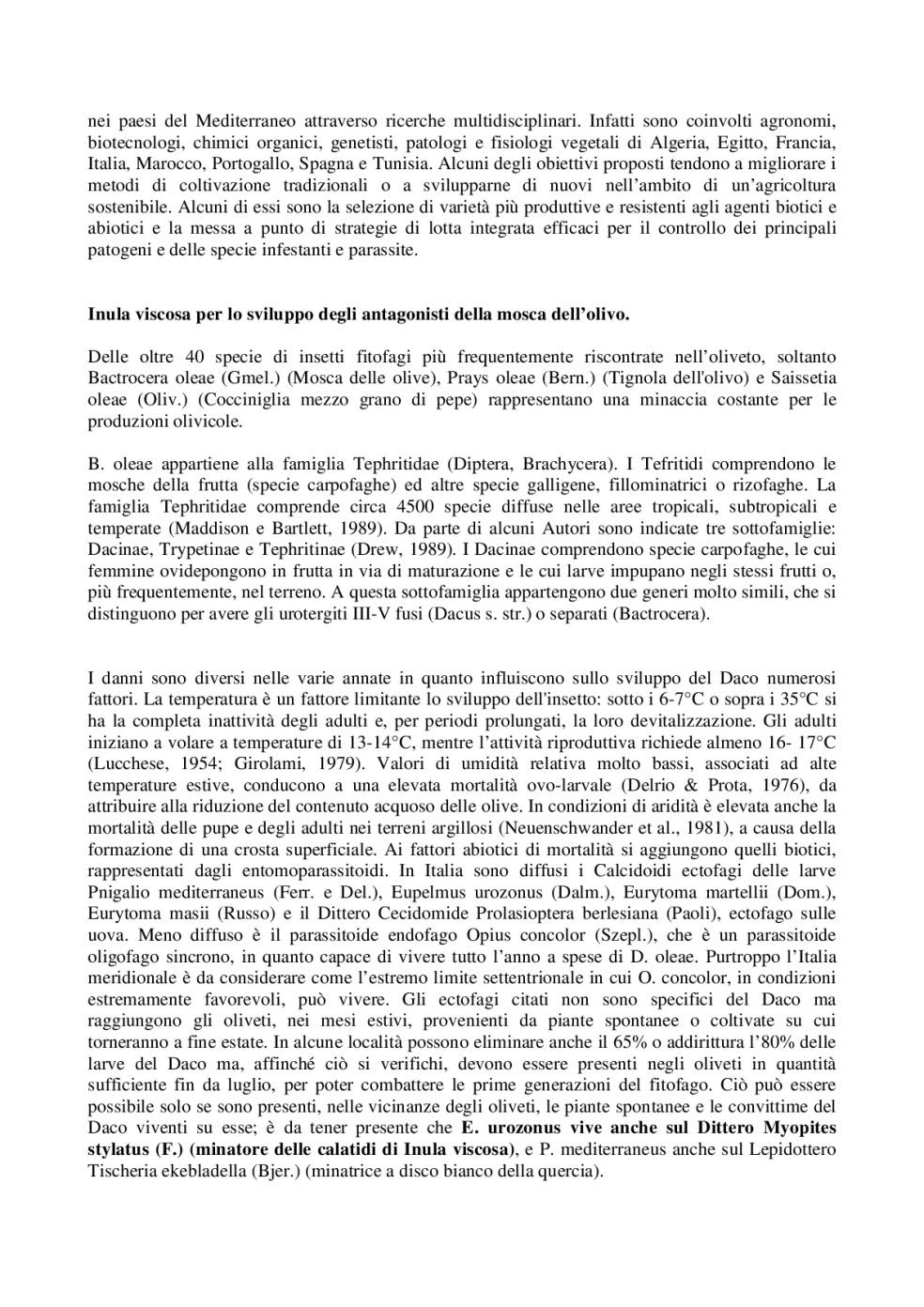 Inula-Viscosa_-controllo-della-mosca-dell'olivo-e-protezione-delle-api-da-varroa-003