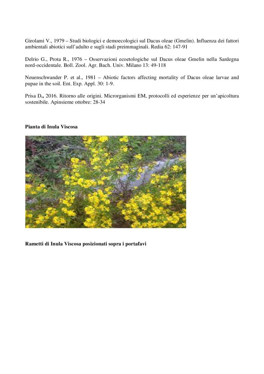 Inula-Viscosa_-controllo-della-mosca-dell'olivo-e-protezione-delle-api-da-varroa-006