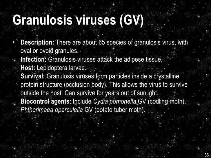 I GRANULOSIS VIRUS: COSA SONO E A COSASERVONO?