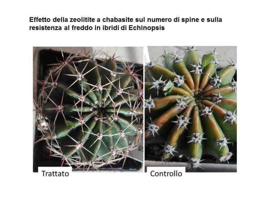L'uso della zeolitite a chabasite nella protezione degli stress termici (Dr. DomenicoPrisa)
