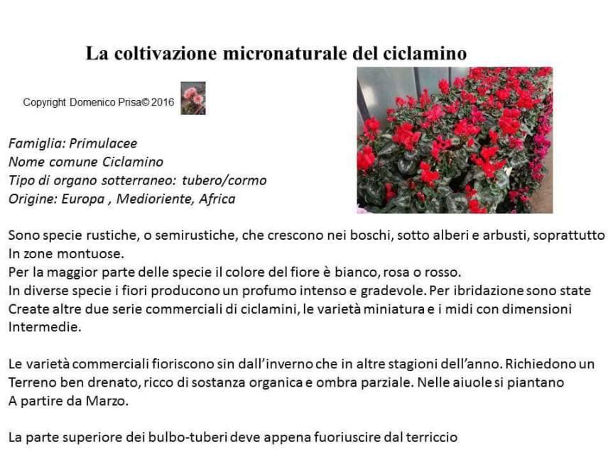 TRATTAMENTO MICRONATURALE DELCICLAMINO