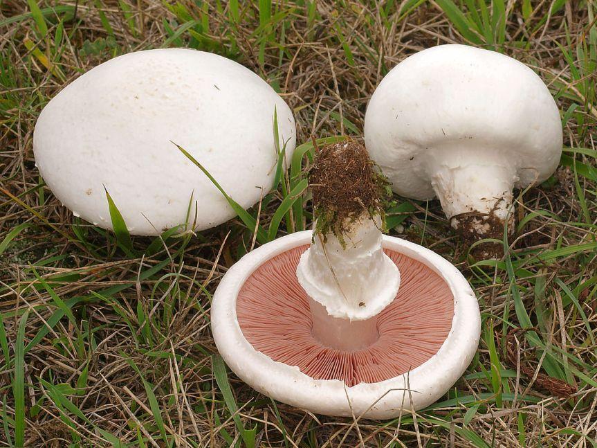 Micronaturale: coltivazione dei funghi per usoalimentare