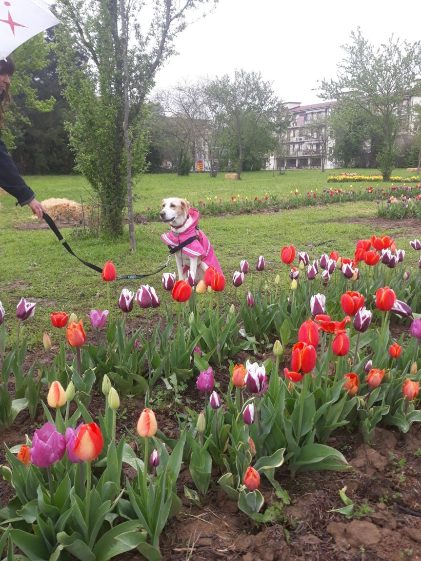 Il giardino dei millecolori