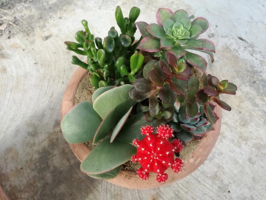 Cactuslandia: l'arte e i colori non hanno maifine