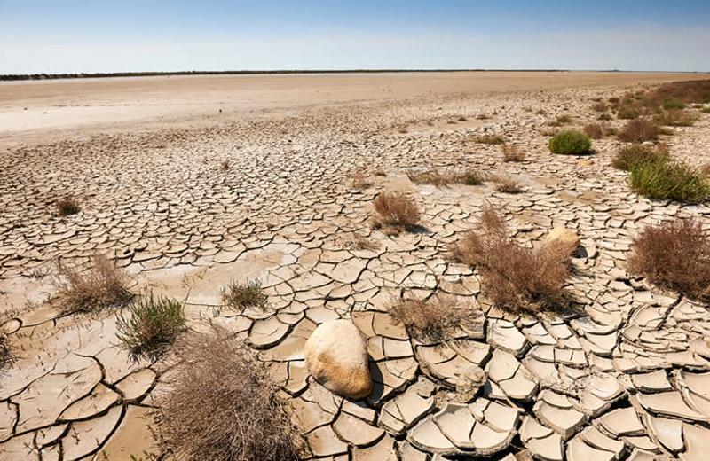 Micronaturale: la microbiologia nei suoli desertici come influenza la vita delle comunitàvegetali