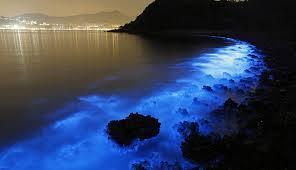 Micronaturale: la bioluminescenzabatterica
