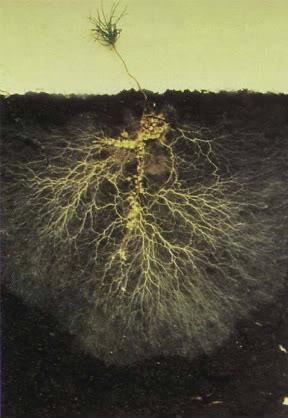 Micronaturale: I MICRORGANISMI della rizosfera e delrizopiano