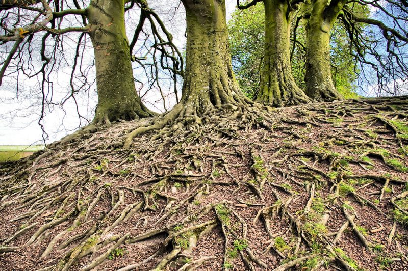 Micronaturale: Un complesso di proteine che regola lo sviluppo dei vegetali consentirà di progettare piante in grado di difendersi meglio da insetti emalattie