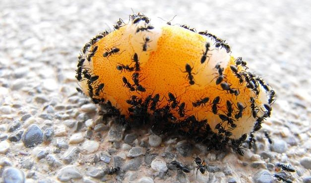 Micronaturale: il controllo Delle formiche con metodinaturali