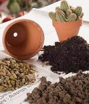 Micronaturale: La rinvasatura delle piantegrasse.