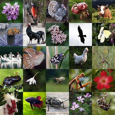 Micronaturale: le relazioni che esistono tra biodiversità eAgricoltura.
