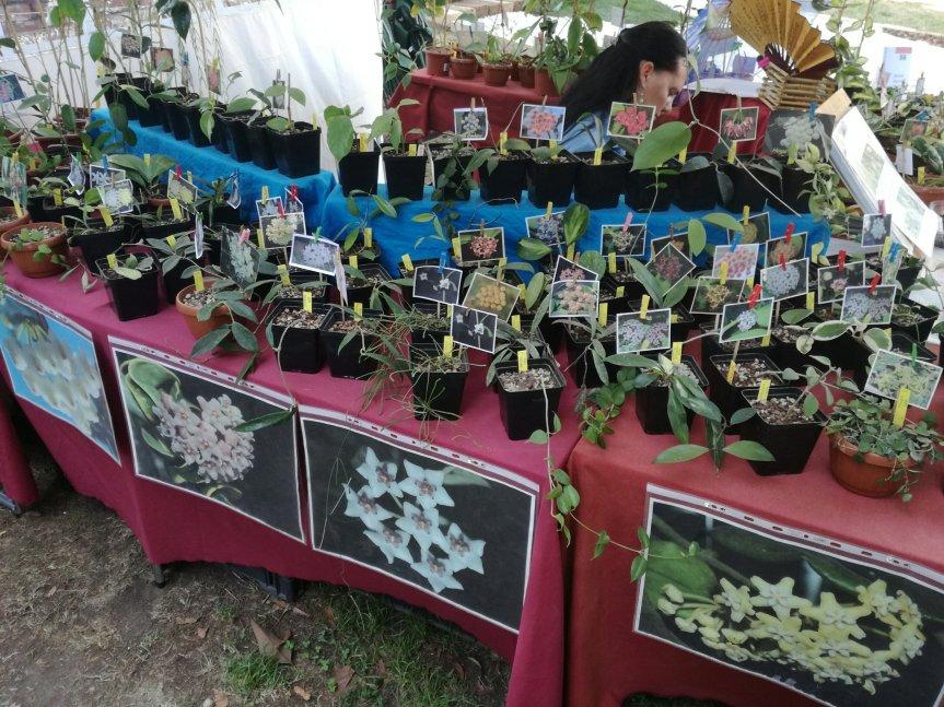 Micronaturale: la propagazione delle piantegrasse