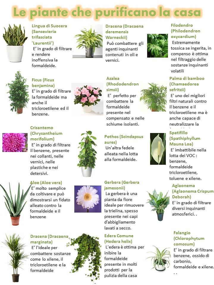 Micronaturale: Come mantenere salubre l'aria degli ambienti interni con le piante e i Microrganismi del suolo La sindrome dell'edificio insalubre
