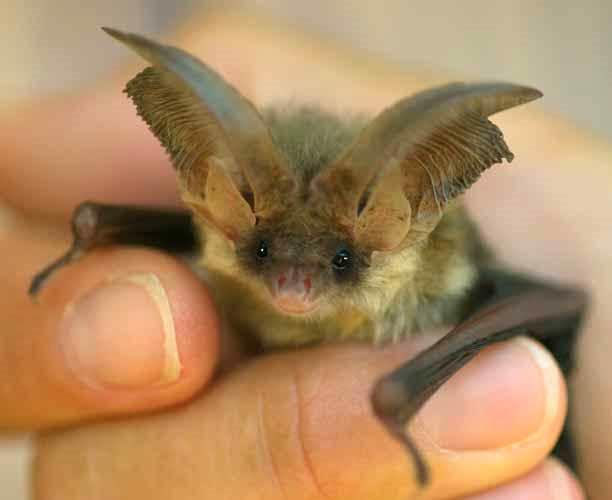 Micronaturale: utilità dei pipistrelli innatura