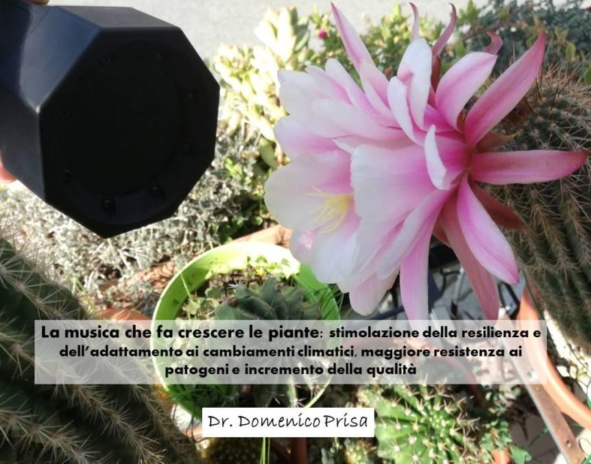 La musica che fa crescere le piante: stimolazione della resilienza e dell'adattamento ai cambiamenti climatici, maggiore resistenza ai patogeni e incremento della qualità(Ebook)