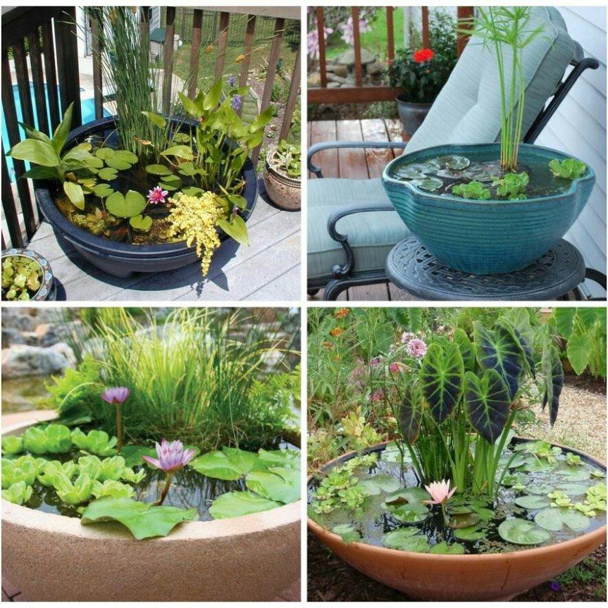 Micronaturale: Le piante acquatiche epalustri