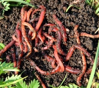 Micronaturale: l'azione dei microbi decomponenti nelsuolo