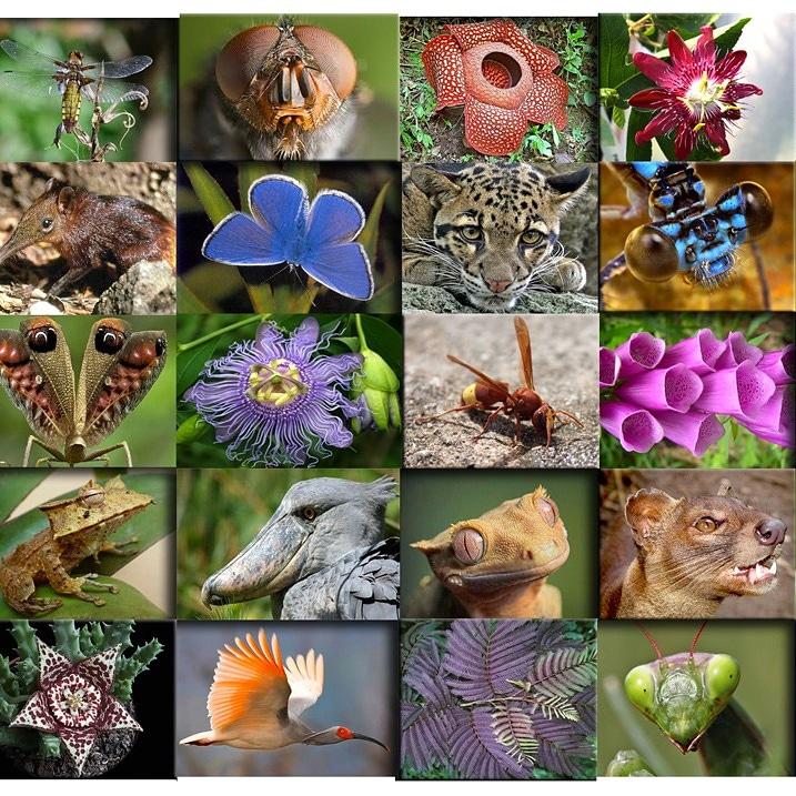 Micronaturale: I vantaggi che la biodiversità vegetale offre all'uomo e allamedicina