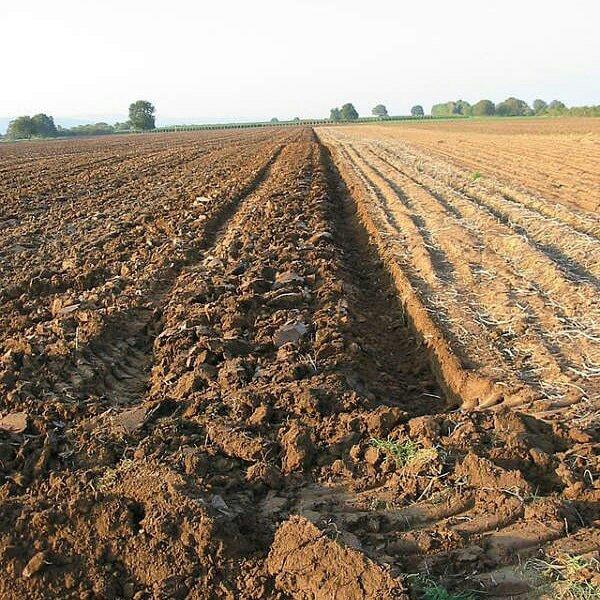 Micronaturale: il terreno intempera