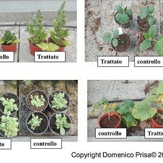 Micronaturale: a cosa dobbiamo fare attenzione quando acquistiamo piante da orto datrapiantare?