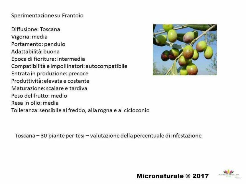 Micronaturale: Valutazione di prodotti di sintesi, naturali e film protettivi (caolino, clinoptilolite e chabasite) per la difesa della mosca dell'olivo