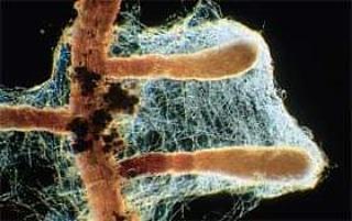 Micronaturale: le simbiosimicorriziche