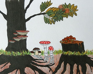 Micronaturale: la simbiosi e la patogenesi tra piante efunghi