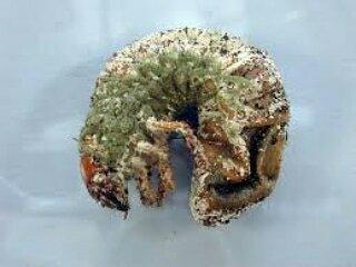 Micronaturale: Impiego di Batteri, Virus e Funghi comebioinsetticidi