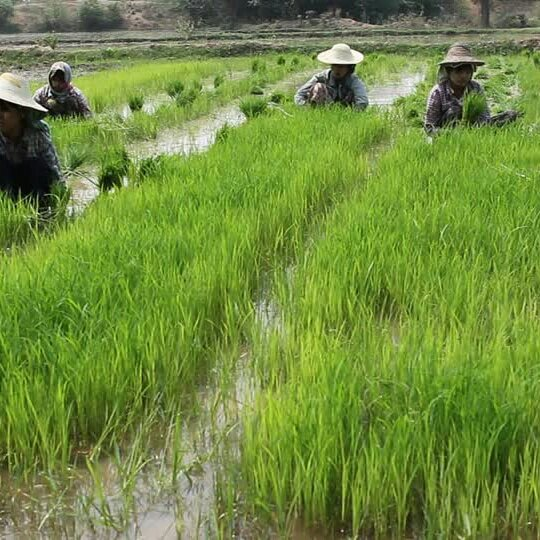 Micronaturale: Applicazioni delle alghe in Microbiologia del suolo: biostimolanti e indicatori della fertilità delsuolo