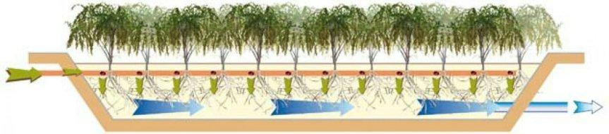 Micronaturale: La degradazione con l'uso delle piante e i tipi difitorisanamento