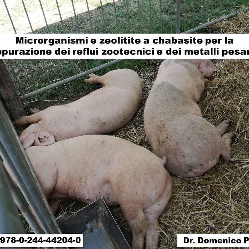 Book:Microrganismi e zeolitite a chabasite per la depurazione dei reflui zootecnici e dei metallipesanti