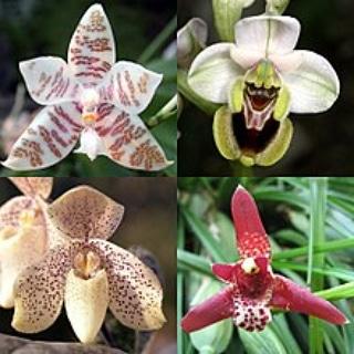Le micorrize delleorchidee