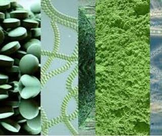 I Microrganismi come alimenti e integratorialimentari