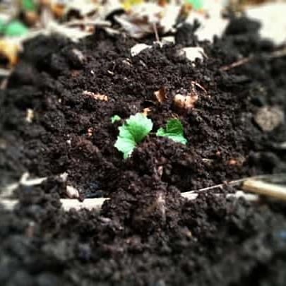 A cosa serve la fertilizzazioneorganica?